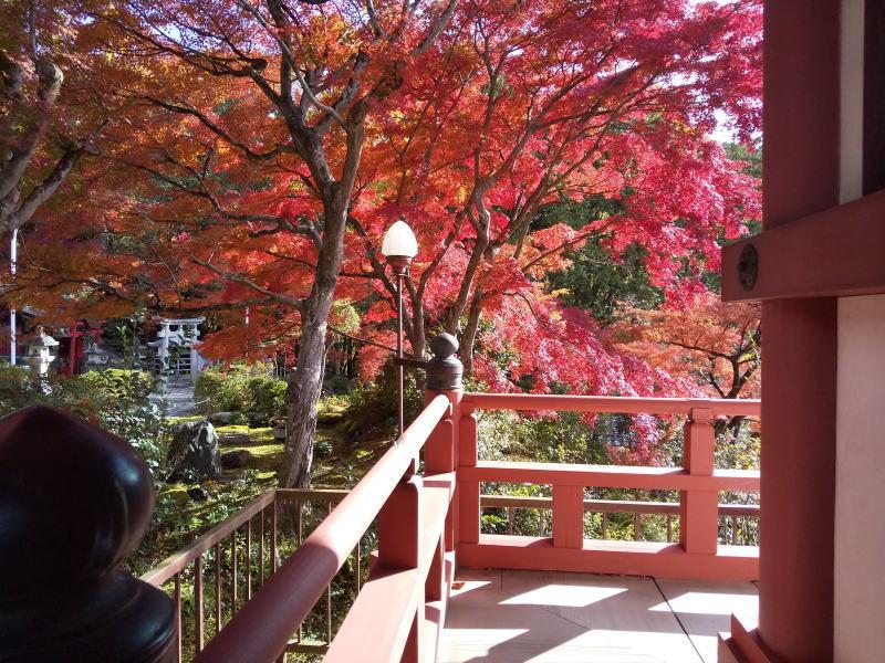三明院 2019 / 京都 ブログ ガイド