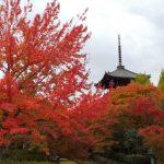 三重塔 2019 / 京都 ブログ ガイド