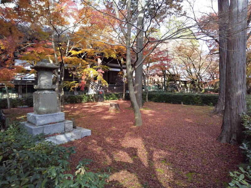 本堂裏敷き紅葉 2019 / 京都 ブログ ガイド