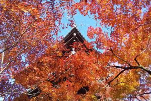 2020年11月 京都イベント情報 / 京都 ブログ ガイド