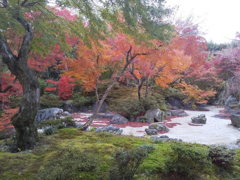 本堂横の庭 / 京都 ブログ ガイド