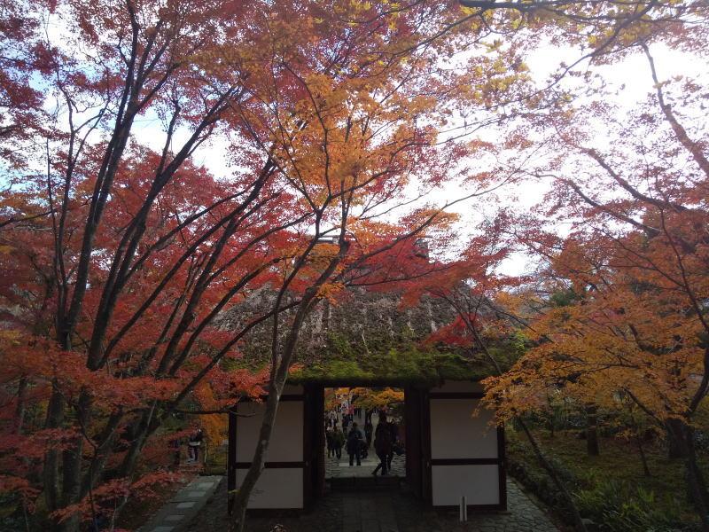 常寂光寺 2019 / 京都 ブログ ガイド