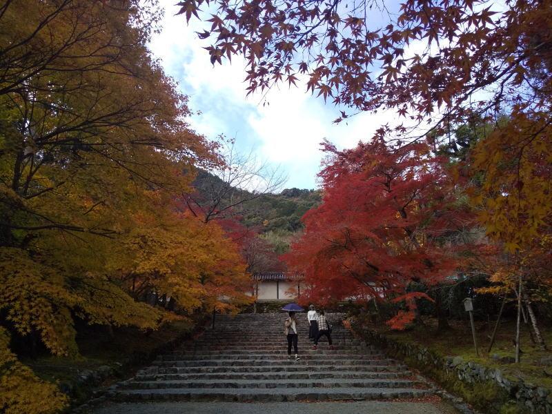 紅葉の馬場 / 京都 ブログ ガイド