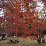 京都御所 母子の森 2019 / 京都 ブログ ガイド