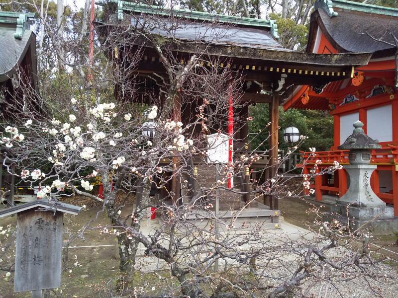 京都 観光・旅行 2020 梅 / 京都 ブログ ガイド