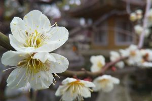 2021年3月 京都イベント情報 / 京都 ブログ ガイド
