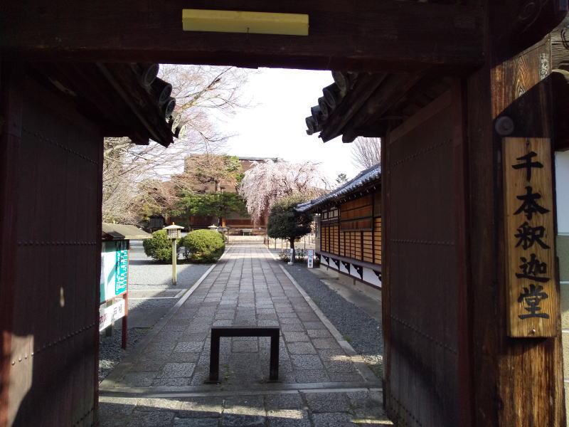 千本釈迦堂 阿亀桜 2020 / 京都 ブログ ガイド