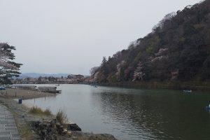 嵐山 2020 桜 /京都 ブログ ガイド