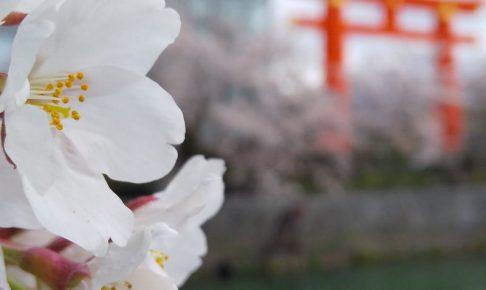 2021年4月 京都イベント情報岡崎 琵琶湖疎水沿いの桜 2020