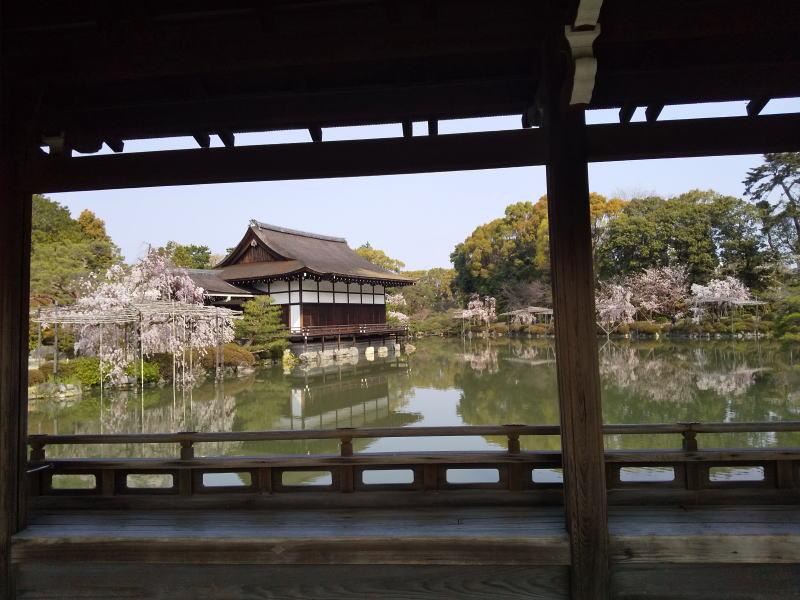 京都 おすすめ 桜スポット 平安神宮 桜 2020 / 京都 ブログ ガイド