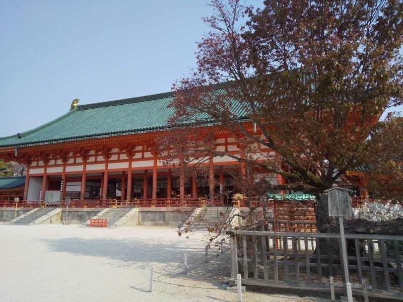 平安神宮 左近の桜 / 京都 ブログ ガイド