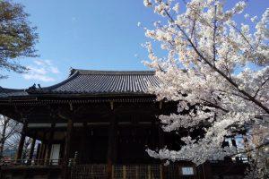 立本寺 桜 2020 / 京都 ブログ ガイド