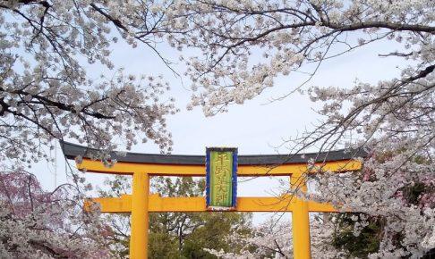 平野神社 桜 2020 / 京都 ブログ ガイド