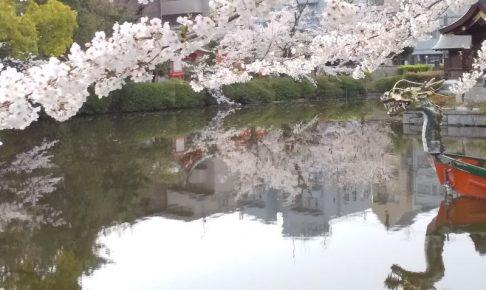 神泉苑 桜 2020 / 京都 ブログ ガイド