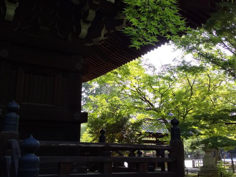 真如堂 青紅葉 2020 / 京都 ブログ ガイド