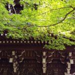 青紅葉 / 京都 ブログ ガイド