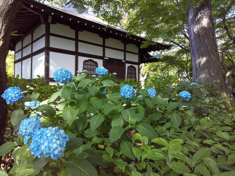 紫陽花 / 京都 ブログ ガイド