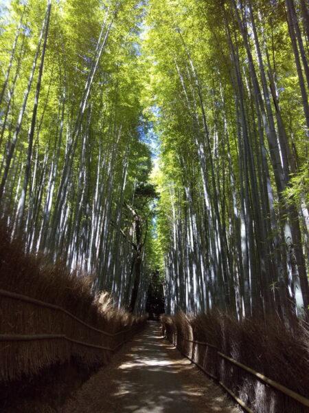 竹林の小径 / 京都 ブログ ガイド