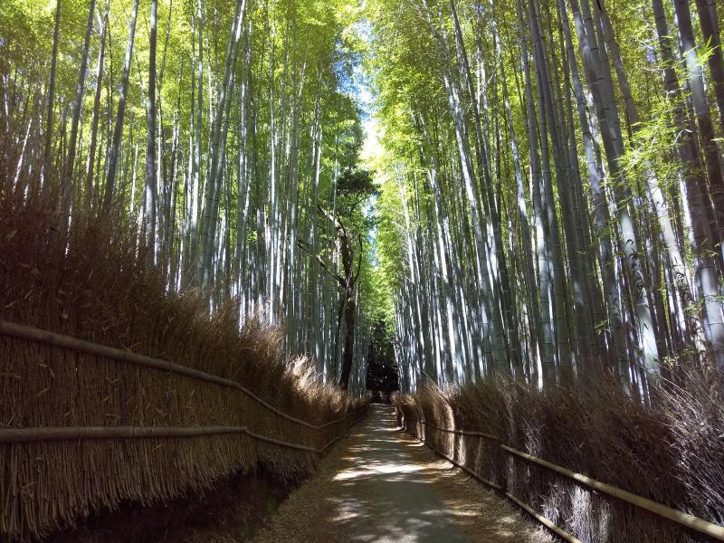 2021年5月 京都イベント情報 / 京都 ブログ ガイド
