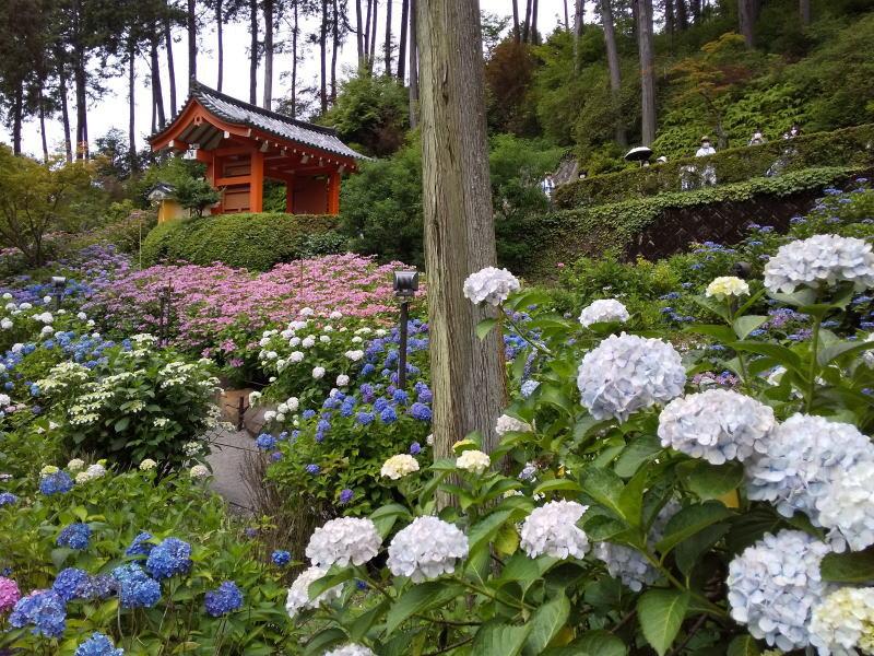 2021年6月 京都イベント情報 三室戸寺 2020 / 京都 ブログ ガイド