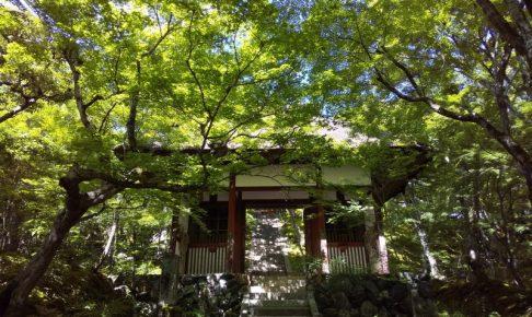 常寂光寺 青紅葉 2020 / 京都 ブログ ガイド