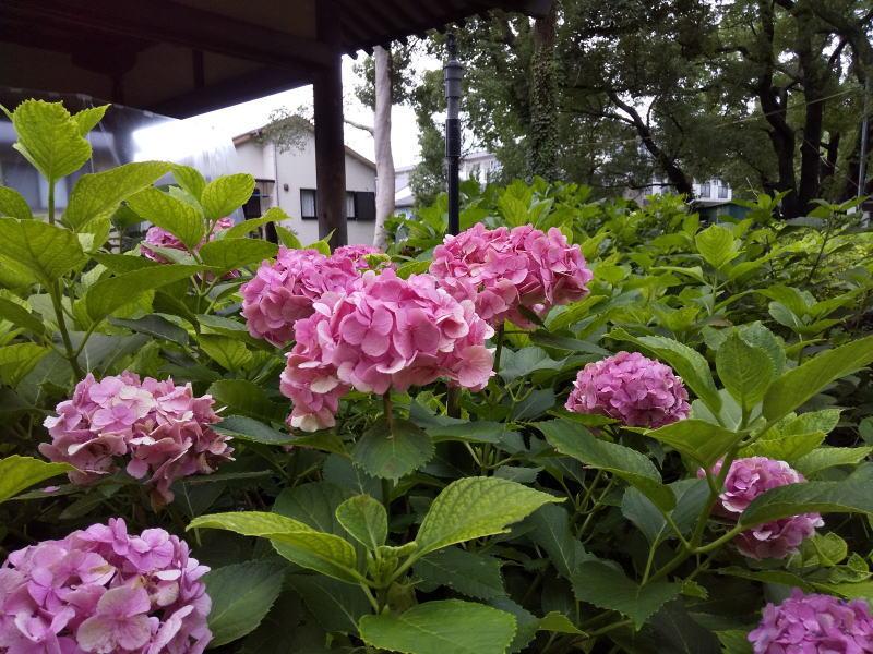 藤森神社 2020 / 京都 ブログ ガイド
