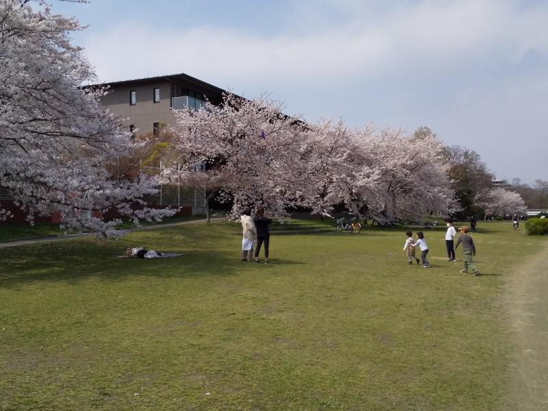鴨川と賀茂川 / 京都 ブログ ガイド