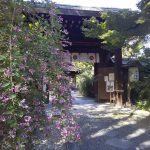 梨木神社 萩 2020 / 京都 ブログガイド