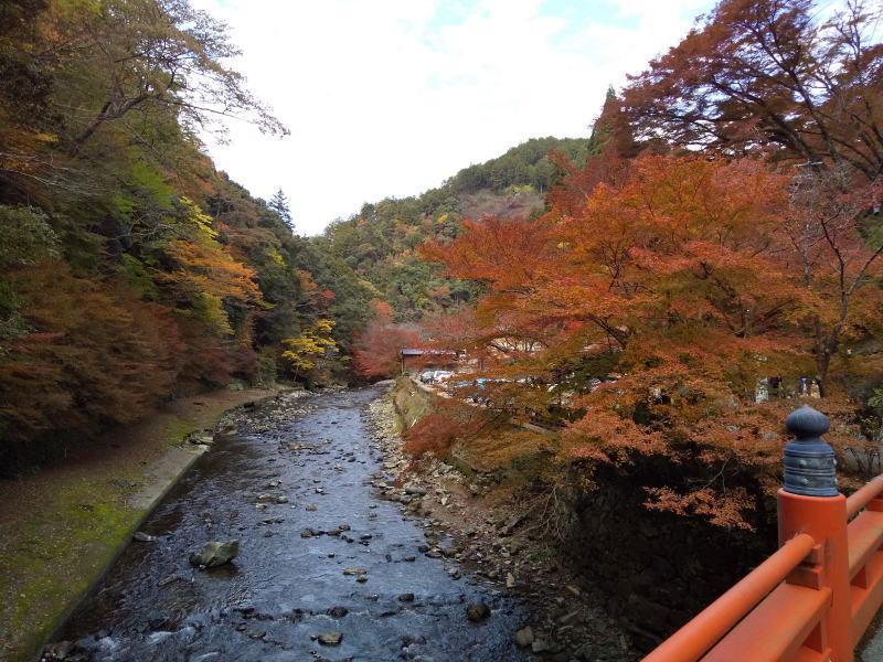 清滝川沿いの紅葉 / 京都ブログガイド