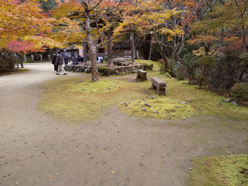 鐘楼横の苔 / 京都ブログガイド