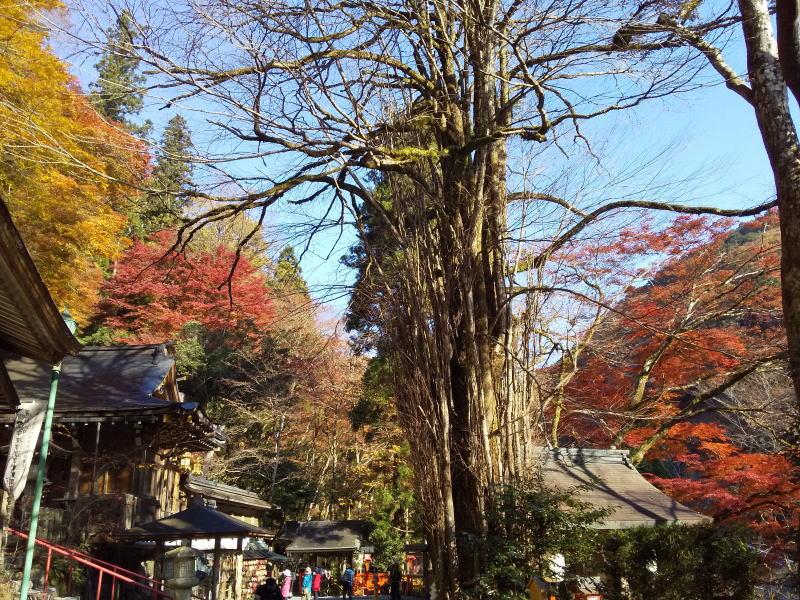 京都 御神木のある神社 貴船神社 2020