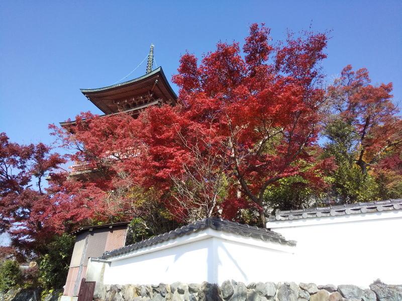 多宝塔 / 京都ブログガイド