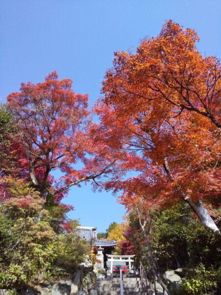 三明院 2020 / 京都ブログガイド
