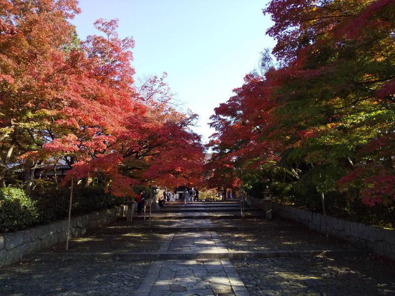 真如堂 2020 / 京都ブログガイド