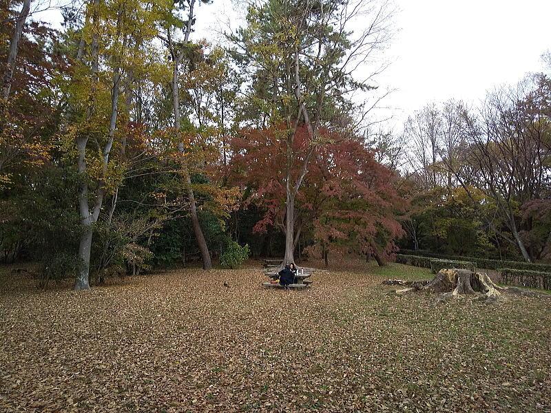母子の森 2020 / 京都ブログガイド