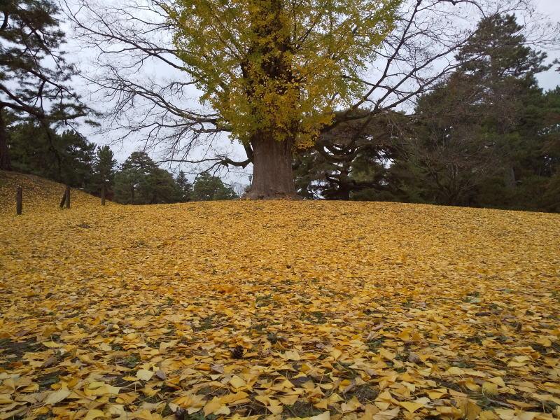 京都御所 2020 / 京都ブログガイド