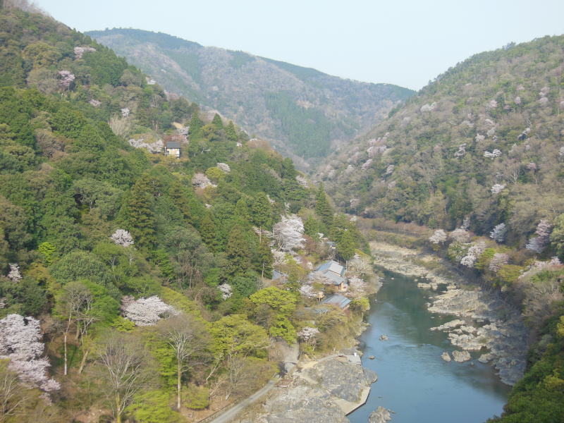京都 おすすめ 桜スポット 保津峡