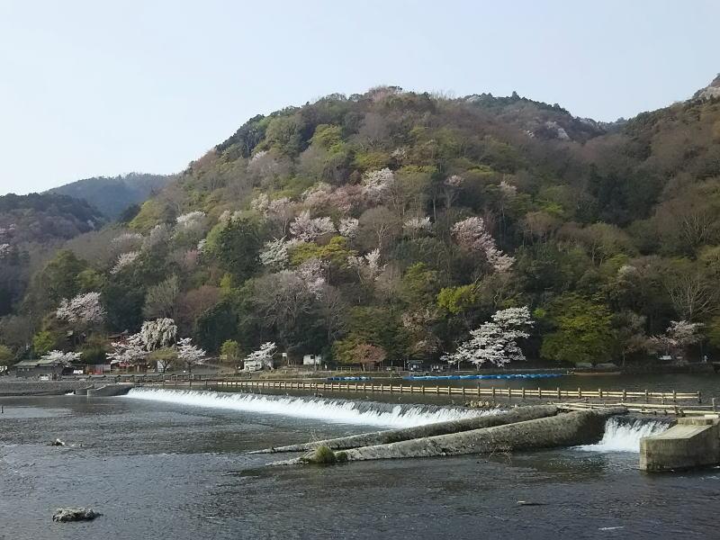京都 おすすめ 桜スポット / 京都 ブログ ガイド