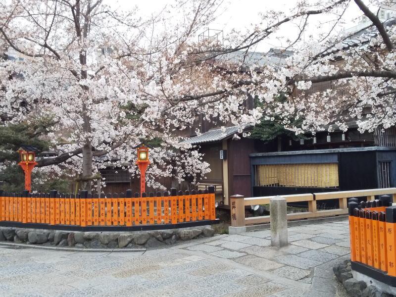 祇園白川辺り / 京都 ブログガイド