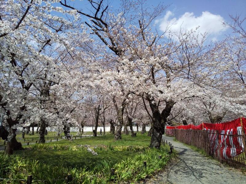 平野神社 2021 / 京都ブログガイド
