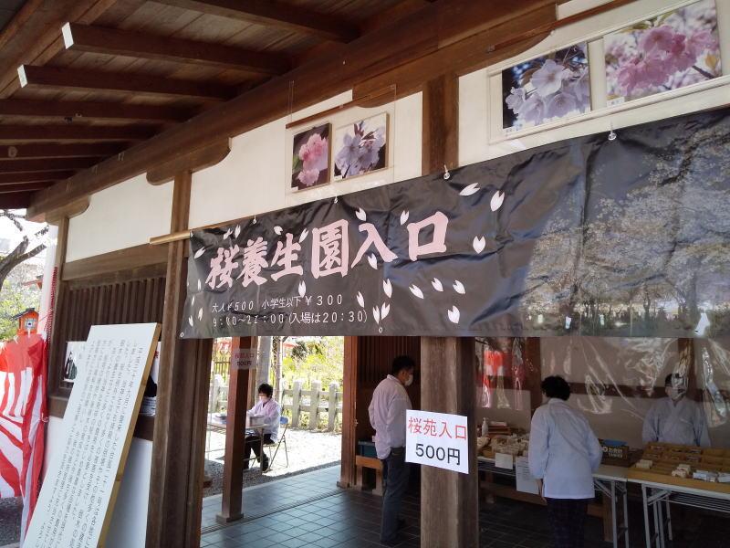 桜養生園入口 / 京都ブログガイド