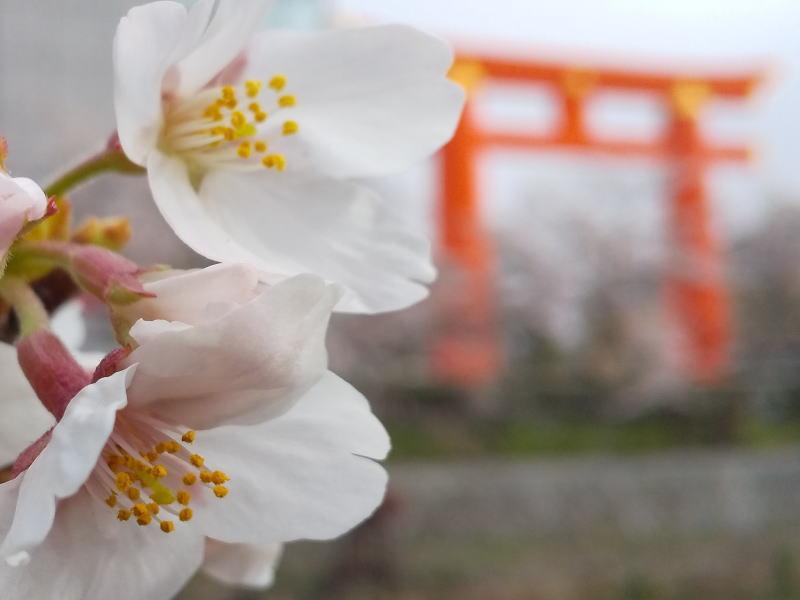 岡崎疎水 2021 / 京都ブログガイド