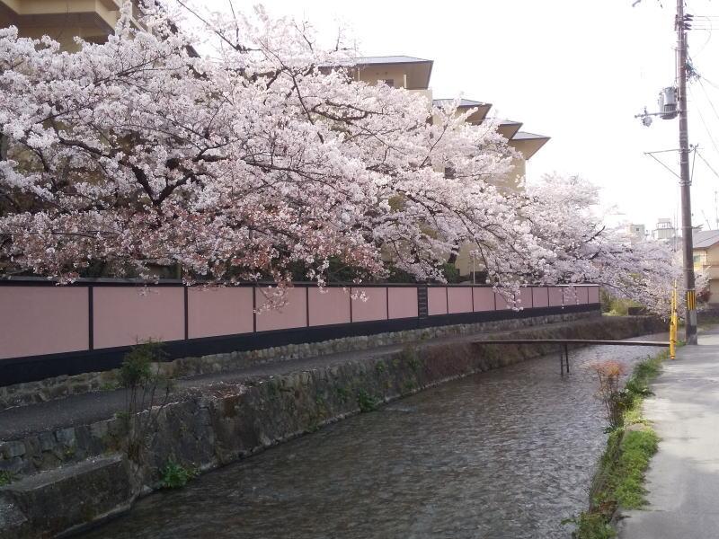 白川の始まり辺り 2021 / 京都ブログガイド