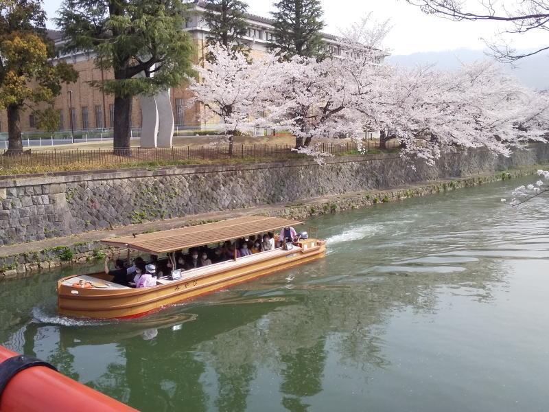 桜と十石舟 2021 / 京都ブログガイド
