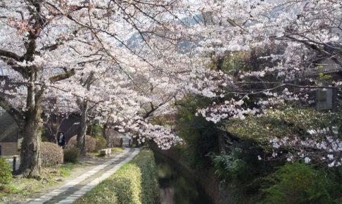 哲学の道 2021 / 京都ブログガイド