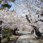 立本寺 2021 / 京都ブログガイド