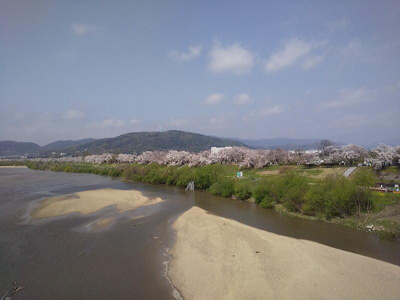 背割堤全景 / 京都ブログガイド