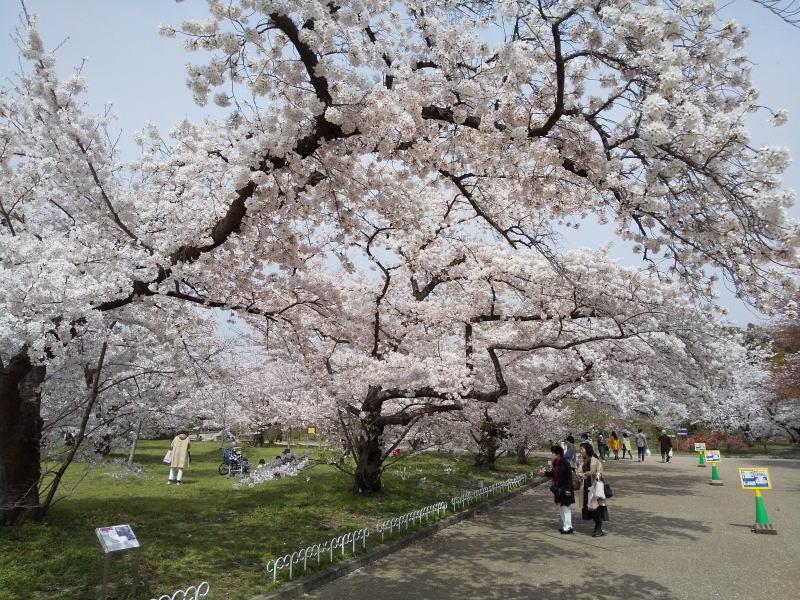 京都府立植物園 2021 / 京都ブログガイド