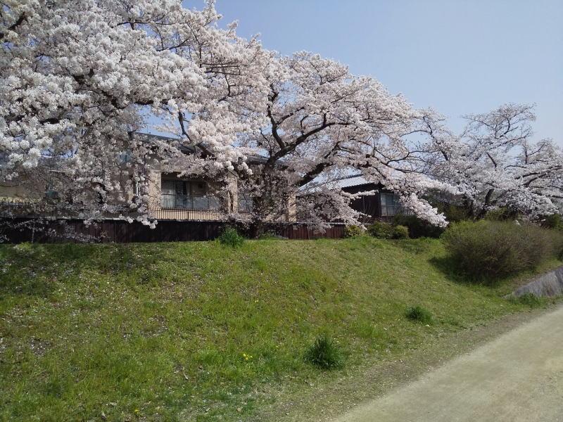 賀茂川 2021 / 京都ブログガイド