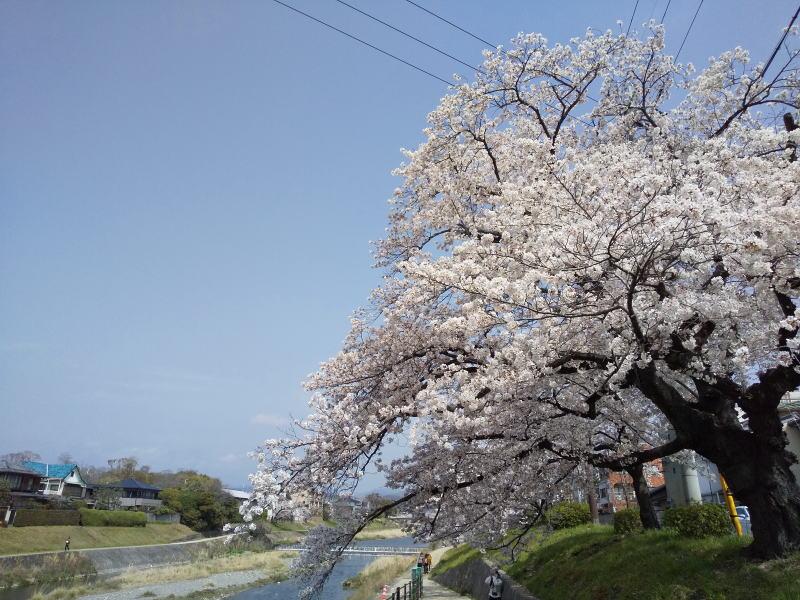 高野川 2021 / 京都ブログガイド